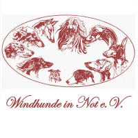 windhunde in not